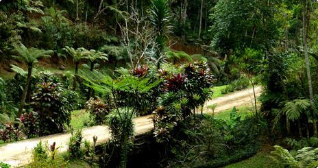 Atlantic Rainforest