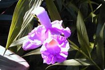 Atlantic Rainforest Brazil Orchid